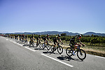 Mitchelton-Scott lead the peloton during Stage 6 of Tour de France 2020, running 191km from Le Teil to Mont Aigoual, France. 3rd September 2020.<br /> Picture: ASO/Pauline Ballet | Cyclefile<br /> All photos usage must carry mandatory copyright credit (© Cyclefile | ASO/Pauline Ballet)