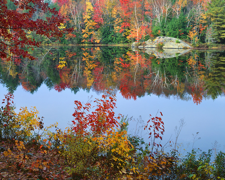 Hillside in fall color along Putnam Pond; Adirondack and Preserve, NY