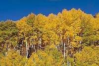 Fall Color, Highway 17 between Alamosa and Chama