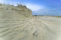 Primary sand dune erosion,  Island Beach State Park, New Jersey