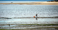 Man clamming in Wellfleet harbor, Wellfleet, Cape Cod, MA, USA