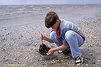 1Y47-361x  Horseshoe Crab - boy returning horseshoe crab to ocean -  Limulus polyphemus