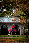 October 30, 2020: Pingxiang, trained by trainer Hideyuki Mori, schools in the paddock in preparation for the Breeders' Cup Sprint at at Keeneland Racetrack in Lexington, Kentucky on October 30, 2020. Alex Evers/Eclipse Sportswire/Breeders Cup
