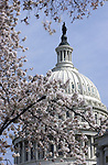 """US Capitol cherry blossoms Washington DC,  United States Capitol Washington D.C., United States Capitol and legislature, Federal government of the United States of America Washington D.C., National Mall, Capitol Hill, Capitol, Capital, quadrants of the District, East and West side of the Capitol 'fronts,"""" East side of Capitol side to arrive for visitors, American Neoclassicism, Architect William Thornton, United States Constitution ratification 1789, L'Enfant, surrounding area of Washington DC, US Capitol, Capitol, United States Congress, Washington, D.C. fine art photography by Ron Bennett (c). Copyright, Washington DC, Politics in the United States, Presidential, Federal Republic, united States Congress, Fine Art Photography by Ron Bennett, Fine Art, Fine Art photo, Art Photography,"""