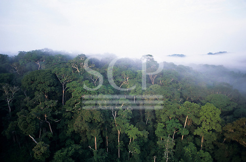 Makande, Gabon. Aerial view of the canopy of the rainforest with large trees and early morning mist.