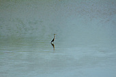 Crane stands in shallow waters of the Salt Fork of the Arkansas River