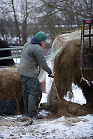 26-1-2021 Unwrapping bales of silage <br /> ©Tim Scrivener Photographer 07850 303986<br />      ....Covering Agriculture In The UK....