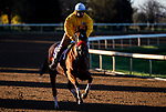 November 4, 2020: Lady Prancealot, trained by trainer Richard Baltas, exercises in preparation for the Breeders' Cup Filly & Mare Turf at Keeneland Racetrack in Lexington, Kentucky on November 4, 2020. Jon Durr/Eclipse Sportswire/Breeders Cup