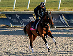 January 21, 2021: Pixelate exercises as horses prepare for the 2021 Pegasus World Cup Invitational at Gulfstream Park in Hallandale Beach, Florida. Scott Serio/Eclipse Sportswire/CSM