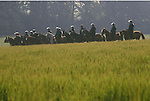 Orgreave Yorkshire. Coal Miners Strike 1984. Mounted Police  wait to charge protesters. 1980s UK