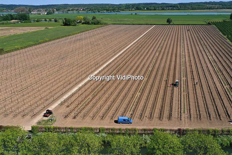 Foto: VidiPhoto<br /> <br /> INGEN - Personeel van Van Ossenbruggen Fruit BV uit Ingen in de Betuwe plant woensdag 18.000 nieuwe bomen voor een boomgaard van 8 ha. Via gps zijn de sleuven kaarsrecht gegraven en staan de jonge stammen van het ras elshof (een elstar-variant) op exact dezelfde afstand van elkaar. De kersverse boomgaard komt op de plek waar vorig jaar 18 jaar oude bomen zijn gerooid. Omdat door de natte winter de grond niet bewerkt -en de boomgaard eerder aangeplant- kon worden, worden de eerste appels pas najaar 2021 geoogst. Van Ossenbruggen behoort met 80 ha fruit tot een van de grootste fruittelers in de Betuwe.