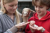 Mädchen, Kind mit jungen Frettchen, Iltisfrettchen, Iltis-Frettchen, Mustela putorius f. furo, domestic polecat, Wildtierhilfe Fiel