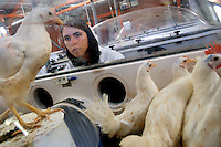 - Experimental Zooprofilattic Institute of the Venezie,  National Reference Center for the searches on the Avian Infuence, chicken in isolation....- Istituto Zooprofilattico Sperimentale delle Venezie,  Centro di Referenza Nazionale per  le ricerche sullíInfluenza Aviaria, pollli in isolamento