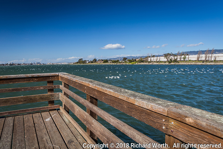 The view from the fishing dock at Martin Luther King Jr. Regional Shoreline where hundreds of birds, mostly gulls, took refuge on the waters of San Leandro Bay while winds whipped overhead, gusting to 35 mph.