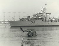 1977 FILE PHOTO - ARCHIVES -<br /> <br /> Loch Ontario Monster? Nope; only Del-Rita. Elephants like water; but Del-Rita is absolutely mad about bathing. There she is happily paddling off Ontario Place; where she's one of the stars of one-ring Puck's Canadian Travelling Circus. She's taken for her swim every morning. She's the only elephant I've ever seen actually swimming; said circus spokesman. She goes way in over her head. It's hard to get her out. Del-Rita; 7-year-old female; likes to go under; too; using her trunk as snorkel. That's the Haida in background.<br /> <br /> Bezant, Graham<br /> Picture, 1977<br /> <br /> 1977<br /> <br /> PHOTO : Graham Bezant - Toronto Star Archives - AQP