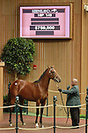 September 08, 2014:Hip #149 Bernardini - Pilfer colt consigned by Lane's End sold for $750,000 to GDS Racing Stables at the Keeneland September Yearling Sale.  Candice Chavez/ESW/CSM