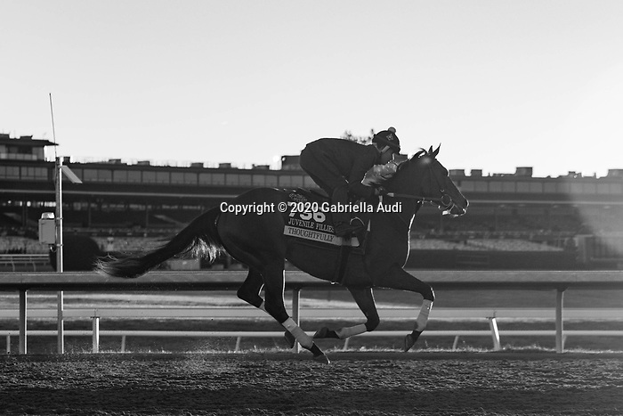 November 4, 2020: Thoughtfully, trained by trainer Steven M. Asmussen, exercises in preparation for the Breeders' Cup Juvenile Fillies at Keeneland Racetrack in Lexington, Kentucky on November 4, 2020. Gabriella Audi/Eclipse Sportswire/Breeder's Cup/CSM