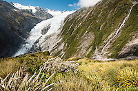 Franz Josef Glacier and alpine flora near Castle Rock Hut, Westland Tai Poutini National Park, West Coast, World Heritage Area, New Zealand