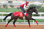 RIYADH, SA February 19 2021: PRINCE OF ARRAN (GB) Track work from King Abddulaziz Racetrack, Riyadh, Saudi Arabia. Shamela Hanley/Eclipse Sportswire/CSM