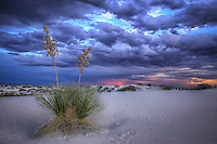 Lone Yucca - New Mexico - White Sands NM