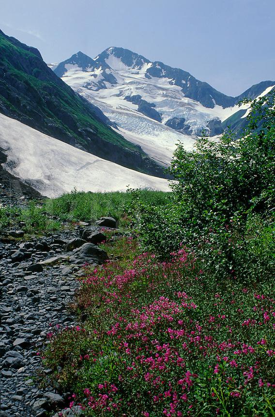 Byron Glacier on the Kenai Peninsula, Alaska. Kenai Peninsula, Alaska, USA