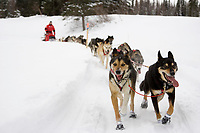 Fabrizio Lovati travels on the trail just prior to the Finger Lake checkpoint during the 2008 Iditarod Sled Dog Race