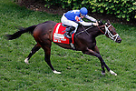 LOUISVILLE, KY - MAY 07: Tepin #1, ridden by Julien Leparoux, wins the Churchill Distaff Turf Mile on May 7, 2016 in Louisville, Kentucky. (Photo by Jon Durr/Eclipse Sportswire/Getty Images)