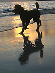 Kailua Beach during the sunset brings out the dog walkers and joggers who great the new day on the island of Oahu, Hawaii.