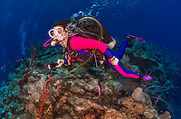 27 July 2015: SCUBA Diver Sally Herschorn explores the formations at Indigo Drop Off, on the North side of Grand Cayman Island. Located in the British West Indies in the Caribbean, the Cayman Islands are renowned for excellent scuba diving, snorkeling, beaches and banking.  Mandatory Credit: Ed Wolfstein Photo *** RAW (NEF) Image File Available ***