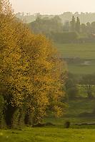 France, Orne (61), Pays d'Auge, Le Renouard: le bocage // France, Orne, Pays d'Auge, Le Renouard, the grove