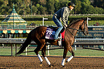 ARCADIA, CA  OCTOBER 30: Breeders' Cup Juvenile Fillies entrant Two Sixty, trained by Mark E. Casse, exercises in preparation for the Breeders' Cup World Championships at Santa Anita Park in Arcadia, California on October 30, 2019.  (Photo by Casey Phillips/Eclipse Sportswire/CSM)