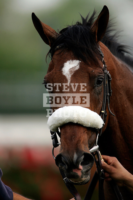 Barbaro, ridden by Edgar Prado, walks around in the winners circle immediately following the 132nd running of the Kentucky Derby at Churchill Downs in Louisville, Kentucky on May 6, 2006..