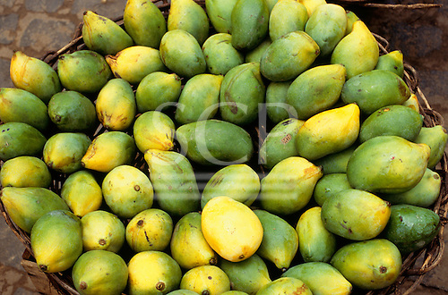 Recife, Pernambuco State, Brazil. Basket full of mangoes.