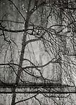 Paris, Tree Shadow, Baumschatten, Baum<br /> <br /> <br /> <br /> <br /> ***HIGHRES AUF ANFRAGE*** ***VOE NUR NACH RUECKSPRACHE***<br />  ***Keine Social_Media Nutzung***<br /> <br /> Engl.: Europe, France, Paris, Tree Shadow, shadows, trees, tree, 31 January 2013<br /> ***HIGHRES ON REQUEST***PUBLICATION ONLY AFTER CONSULTATION WITH LAIF***<br /> ***No social media use***