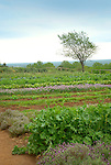 Monticello. Thomas Jefferson estate vegetable garden.