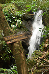 Cockscomb Basin Wildlife Sanctuary, Belize, Central America; view of Ben's Bluff Waterfall with a no jumping allowed sign posted on a tree in the foreground , Copyright © Matthew Meier, matthewmeierphoto.com All Rights Reserved
