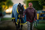OCT 26: Breeders' Cup Juvenile  entrant Eight Rings, trained by Bob Baffert, cools out at Santa Anita Park in Arcadia, California on Oct 26, 2019. Evers/Eclipse Sportswire/Breeders' Cup