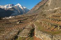 Italie, Val d'Aoste, Morgex: les vignes  d' Ermes Pavese,avec en fond le Mont Chétif// Italy, Aosta Valley, Morgex: Ermes Pavese  vineyards in the background with the Mont Chétif