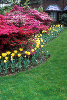 Tulips, rhododendron, azalea, stone house, lawn grass, spring bulbs and flowering shrubs scene view for pretty spring landscaping