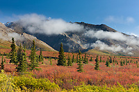 Autumn colors on tundra, Alaska Range mountains, Denali National Park, Interior, Alaska.