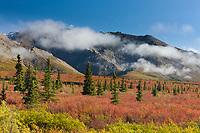 Autumn colors on tundra, Alaska Range mountains, Denali National Park, Interior, Alaska.