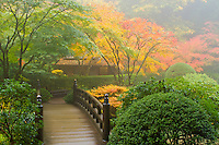 The Moon Bridge and Tea House (Kashin-Tei or called the Flower Heart House) among the Fall colors of the Japanese Maple leaves in the fog at the Portland Japanese Garden