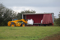 1.10.2020 Unloading bags of seed from a covered trailer <br /> ©Tim Scrivener Photographer 07850 303986<br />      ....Covering Agriculture In The