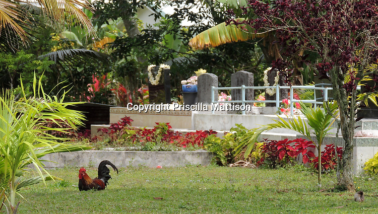Rarotonga, Cook Islands - September 21, 2012:  Bouquets and leis adorn a cemetery.