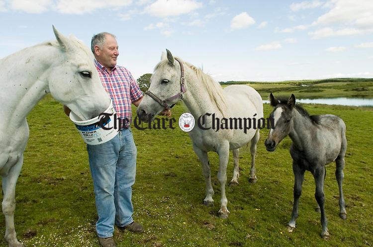 Andy O Donoghue with some of his Connemara ponies on his farm at Lickeen, Kilfenora. Photoraph by John Kelly.