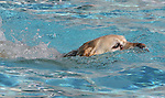 Jazmine swims during the second annual Pooch Plunge at the Carson City Aquatic Center in Carson City, Nev., on Saturday, Sept. 18, 2010..Photo by Cathleen Allison