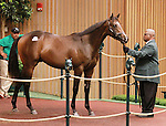 September 10, 2014: Hip #478 Malibu Moon - Be Smart colt consigned by VanMeter Sales, sold for $500,000 at the Keeneland September Yearling Sale.   Candice Chavez/ESW/CSM