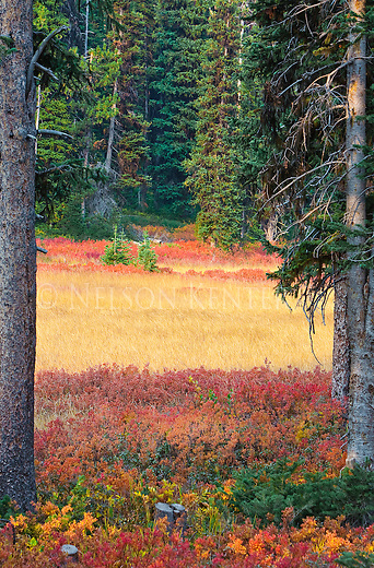 Autumn colors of a meadow in the mountains of western Montana in the Deerlodge National Forest