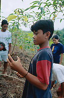 Philippines. Negros Island. Province of Negros Occidental, located in the  Western Visayas region. Barangay (village) Olanganon. A child holds in his hand a baby tree which will be planted to fight erosion. Child labor. Sustainable agriculture.  © 1999 Didier Ruef