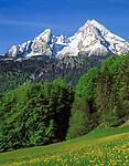 DEU, Deutschland, Bayern, Oberbayern, Berchtesgadener Land, Blumenwiese und der schneebedeckte Watzmann (2.713 m)   DEU, Germany, Bavaria, Upper Bavaria, Berchtesgadener Land, flower meadow and snow covered Watzmann mountain (2.713 m)